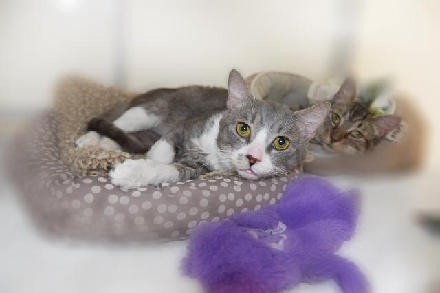 My name at SAFE Haven was Prince Ali and I was adopted!