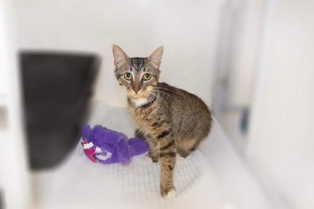 My name at SAFE Haven was Abu and I was adopted!