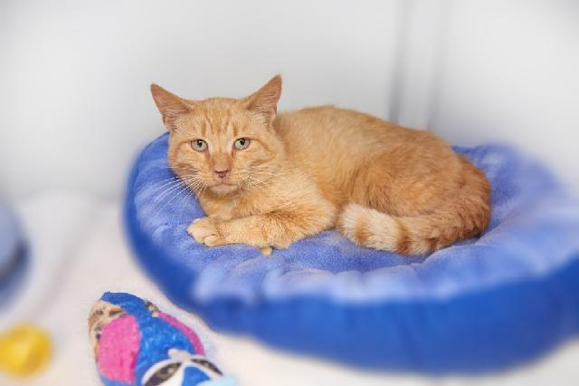 My name is Julien and I am ready for adoption. Learn more about me!