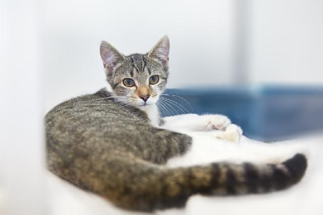 My name at SAFE Haven was Mochaccino and I was adopted!