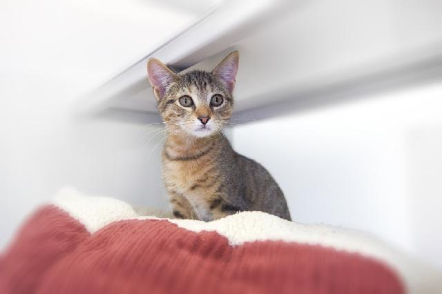 My name at SAFE Haven was Sallee and I was adopted!