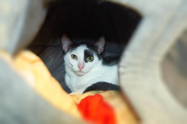 My name at SAFE Haven was Bolivia and I was adopted!