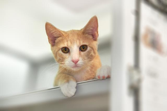 My name at SAFE Haven was Perth and I was adopted!