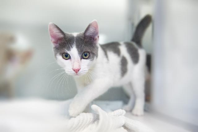 My name at SAFE Haven was Penn and I was adopted!