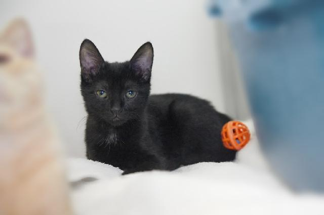 My name is Terra and I am ready for adoption. Learn more about me!