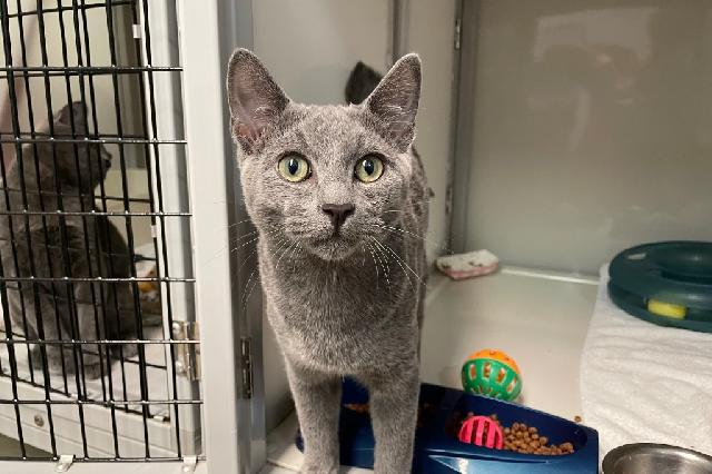 My name at SAFE Haven was Pompey and I was adopted!