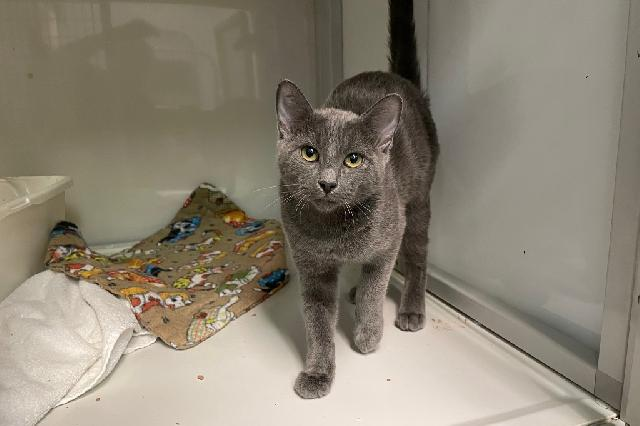 My name at SAFE Haven was Paradise and I was adopted!