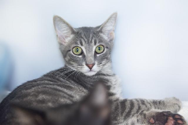 My name at SAFE Haven was Mustard and I was adopted!