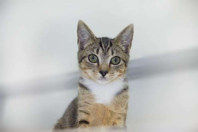My name at SAFE Haven was Keoki and I was adopted!