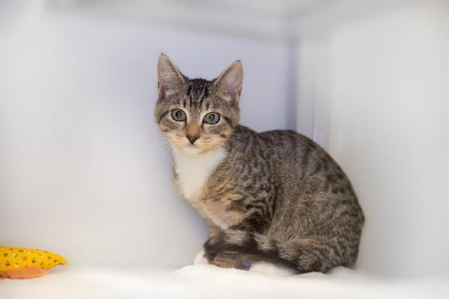 My name at SAFE Haven was Taji and I was adopted!