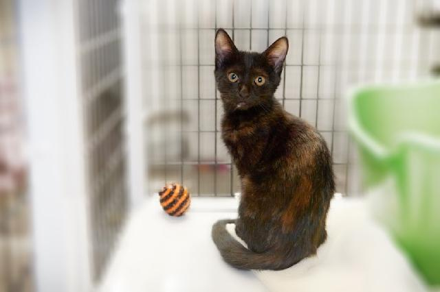 My name at SAFE Haven was Tic and I was adopted!