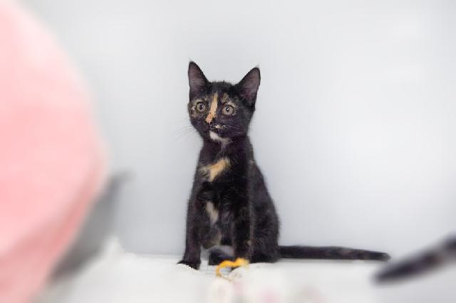 My name at SAFE Haven was Toes and I was adopted!