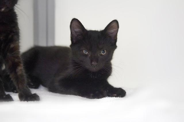 My name at SAFE Haven was Tac and I was adopted!