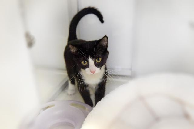 My name at SAFE Haven was Binelli and I was adopted!