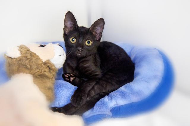 My name at SAFE Haven was Shirataki and I was adopted!