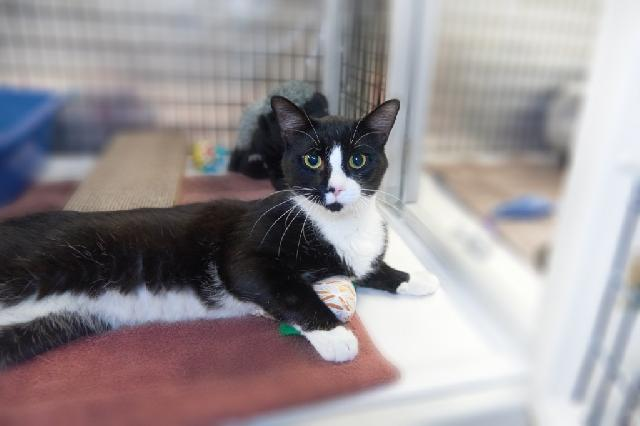 My name is Wyatt Earp and I am ready for adoption. Learn more about me!