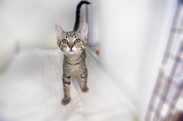 My name at SAFE Haven was Udon and I was adopted!