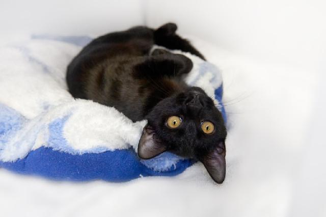 My name at SAFE Haven was Olley and I was adopted!