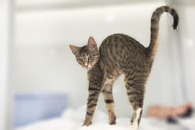 My name at SAFE Haven was Tina and I was adopted!