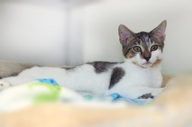 My name at SAFE Haven was Gene and I was adopted!
