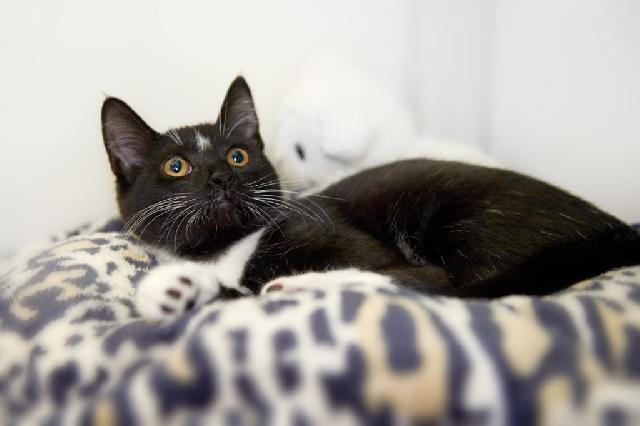 My name is Starlight Doodle and I am ready for adoption. Learn more about me!