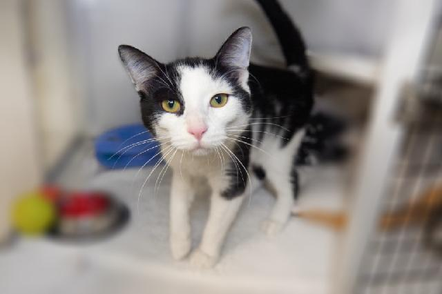 My name at SAFE Haven was Mr. Pickles and I was adopted!