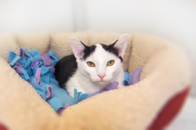 My name at SAFE Haven was Emby and I was adopted!
