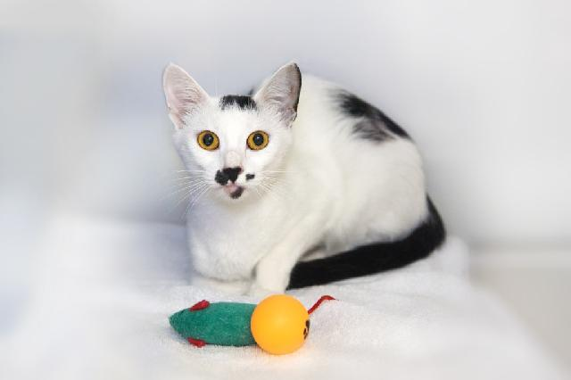 My name at SAFE Haven was Channyl and I was adopted!
