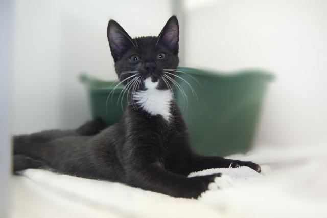 My name at SAFE Haven was Riverbank and I was adopted!