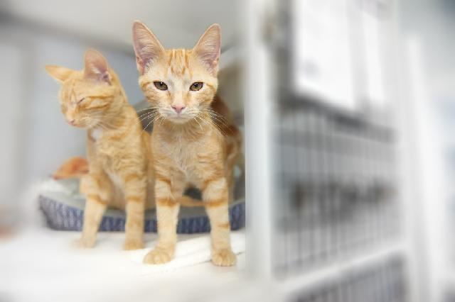 My name is Alden and I am ready for adoption. Learn more about me!