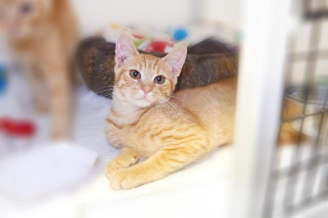 My name at SAFE Haven was Cheesy Poof and I was adopted!