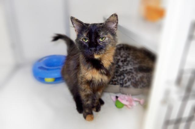 My name at SAFE Haven was Tigerlily and I was adopted!