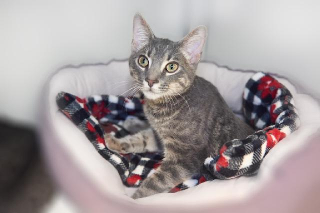 My name is Tom Sawyer and I am ready for adoption. Learn more about me!
