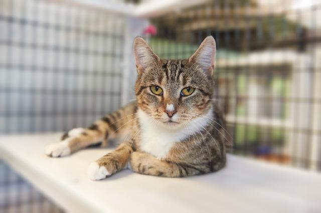My name is Daylily and I am ready for adoption. Learn more about me!