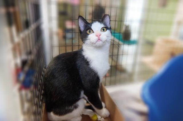 My name at SAFE Haven was Alfalfa Sprout and I was adopted!