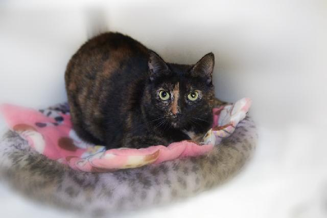 My name at SAFE Haven was Black Eyed Susan and I was adopted!