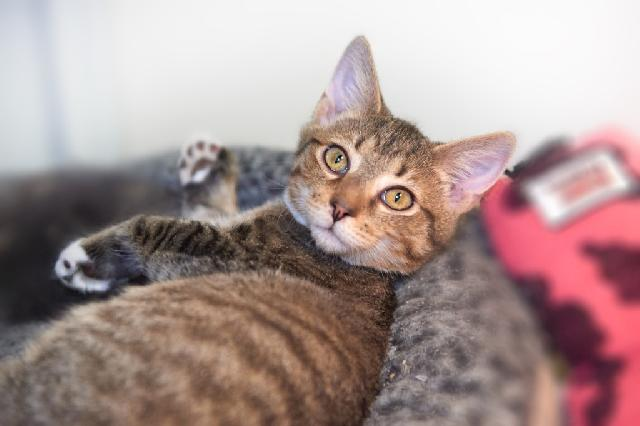 My name at SAFE Haven was Kibbe and I was adopted!