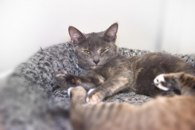 My name at SAFE Haven was Libbe and I was adopted!