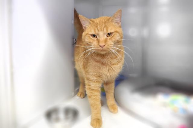 My name at SAFE Haven was Boris Catlov and I was adopted!