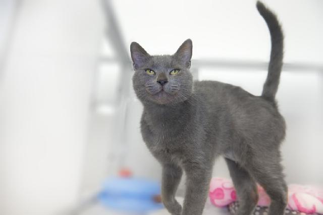 My name at SAFE Haven was Sweet Lady and I was adopted!