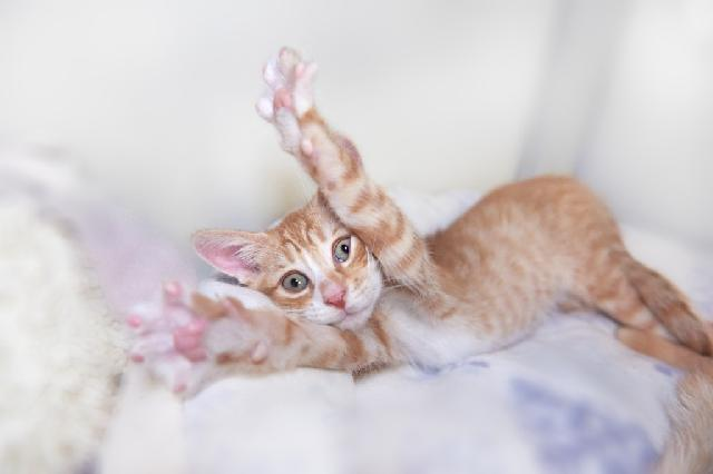 My name is Colby Jack and I am ready for adoption. Learn more about me!