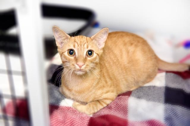 My name is Kovu and I am ready for adoption. Learn more about me!