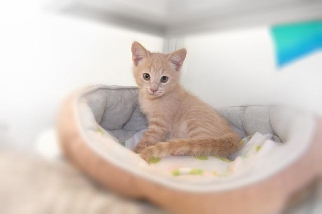 My name at SAFE Haven was Peanut Brittle and I was adopted!