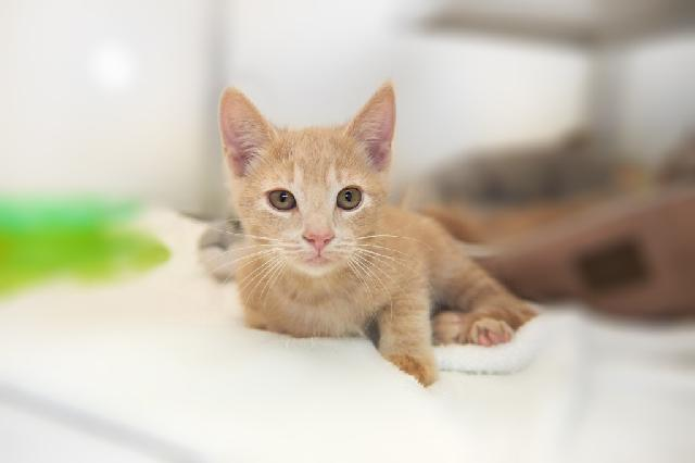 My name at SAFE Haven was Cashew Crunch and I was adopted!