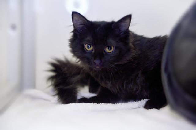 My name at SAFE Haven was Miss Magpie and I was adopted!