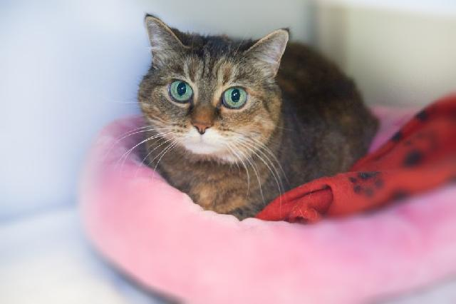 My name is Demeter and I am ready for adoption. Learn more about me!