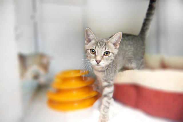 My name is Spirit and I am ready for adoption. Learn more about me!