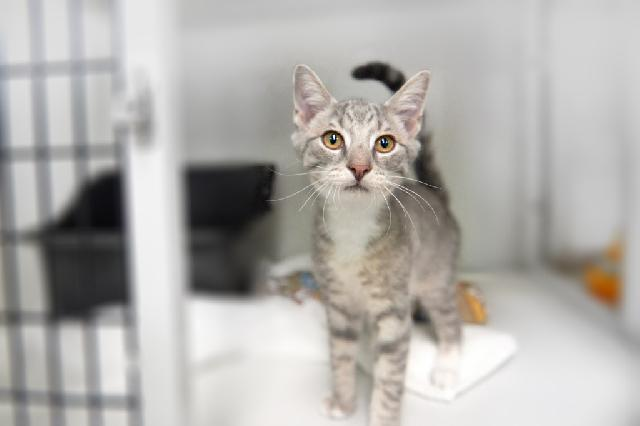 My name is Specter and I am ready for adoption. Learn more about me!