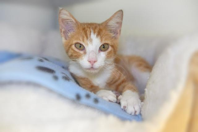 My name at SAFE Haven was Sir Archie and I was adopted!