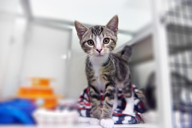 My name is Avocado Toast and I am ready for adoption. Learn more about me!